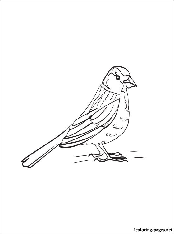 560x750 Sparrow Coloring Page Coloring Pages