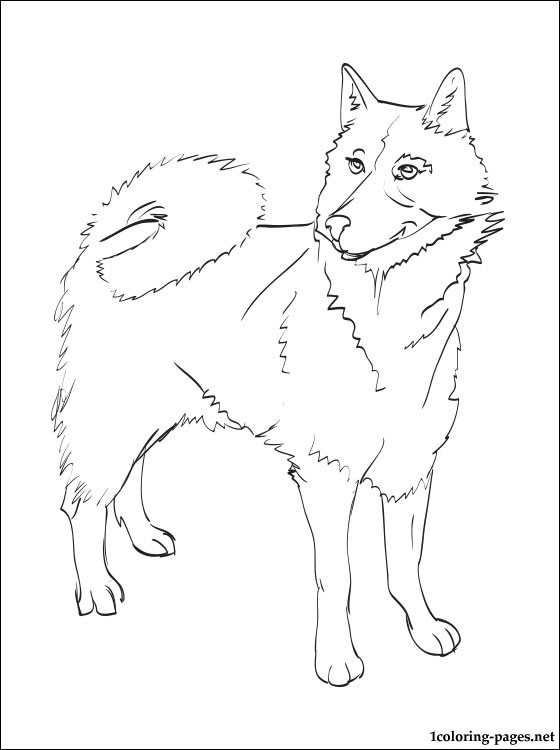 560x750 Finnish Spitz Coloring Page Coloring Pages