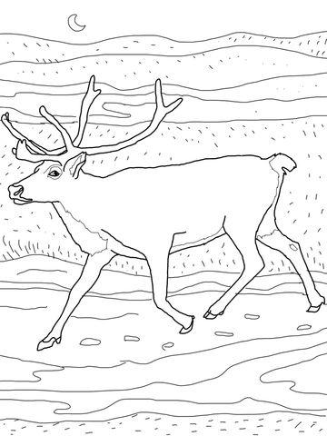 360x480 Caribou Coloring Page Hibernationmigrationadaptation