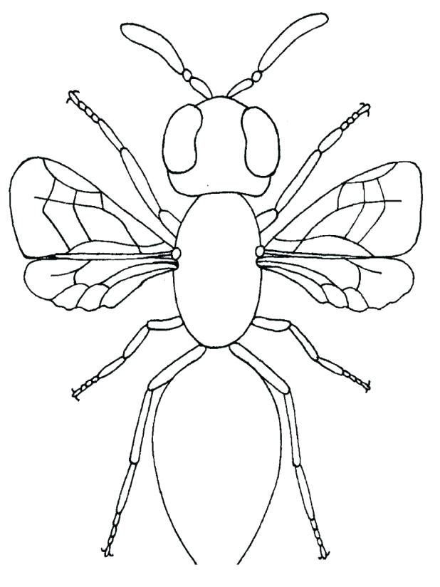 The Best Free Firefly Coloring Page Images Download From 55 Free