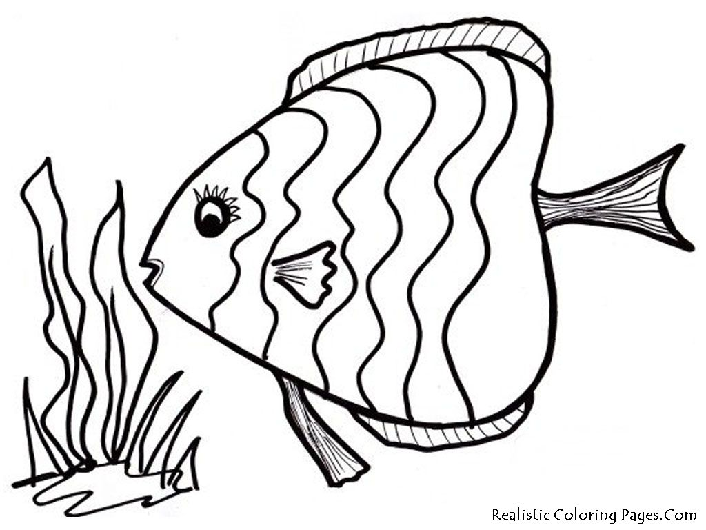1024x768 Fine Cartoon Fish Coloring Page Sheet Pages