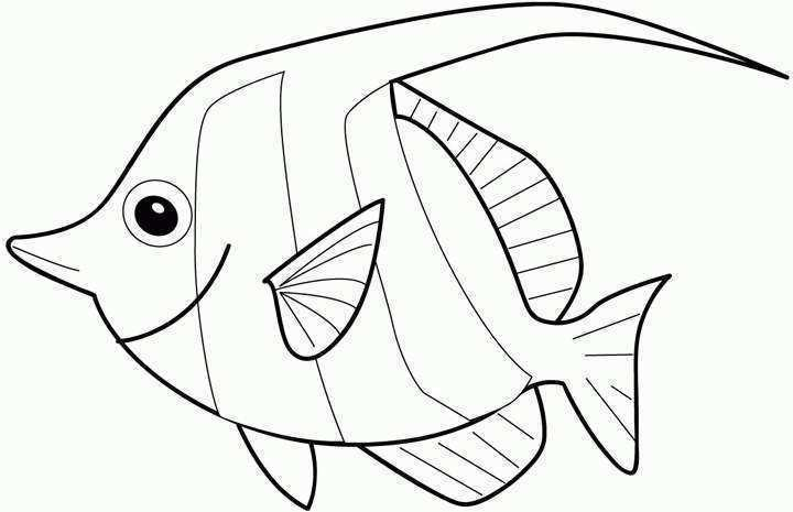 720x465 Gill Fish Coloring Pages Coloring Pages