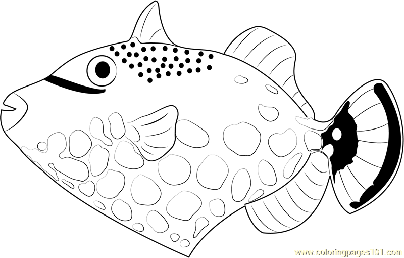 800x510 Clown Trigger Fish Coloring Page
