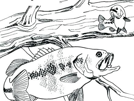 440x330 Bass Fish Coloring Pages