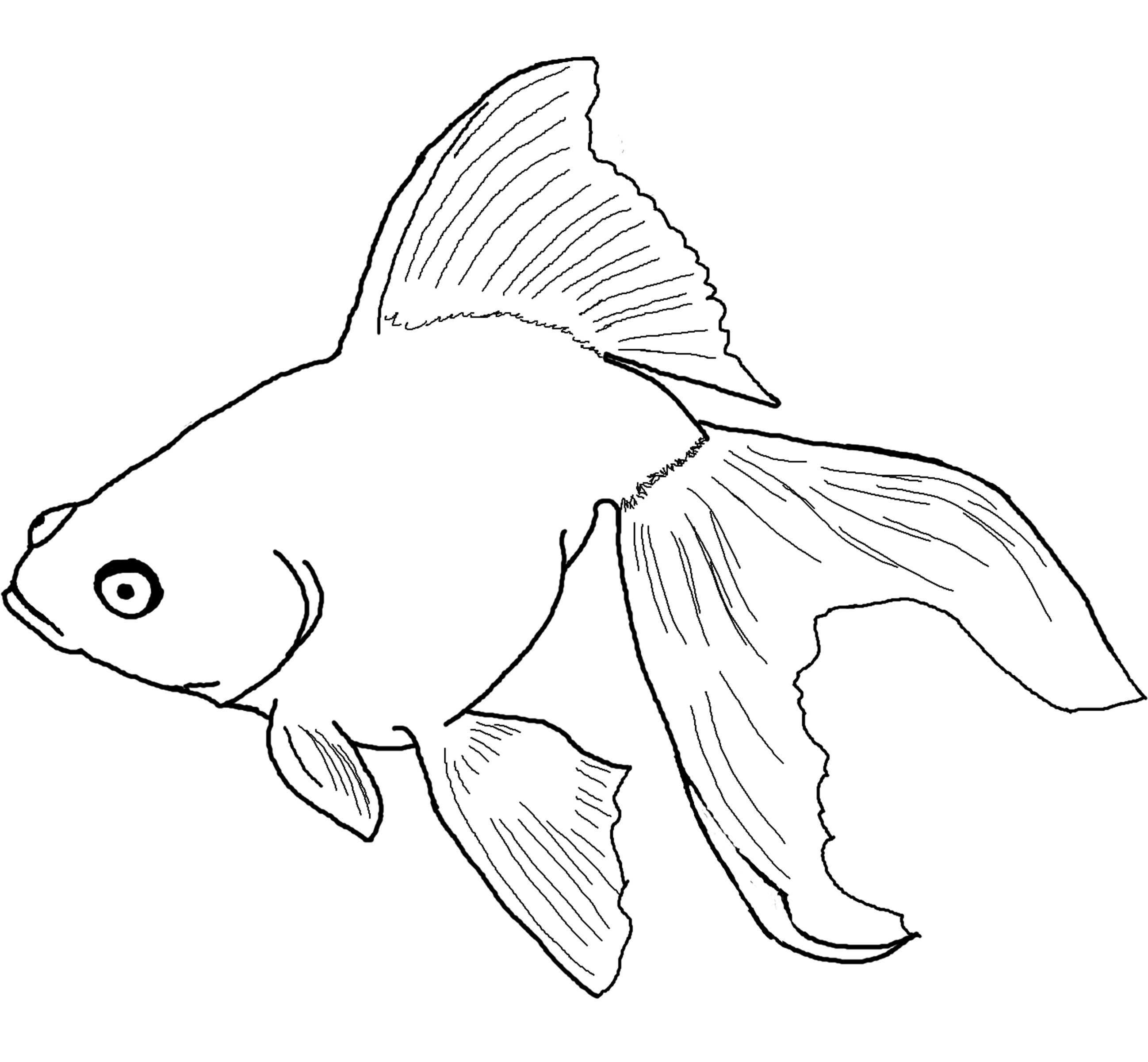 Fish Clip Art Coloring Pages At Getdrawings Com Free For Personal