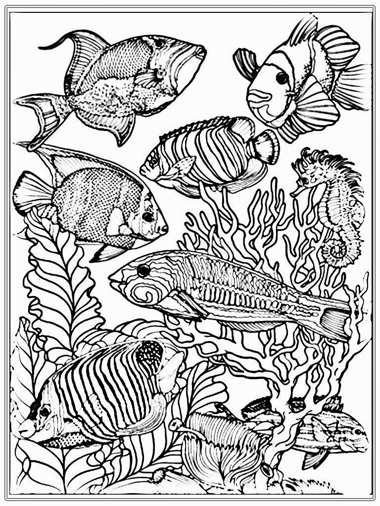 768x1024 Fish Coloring Pages Adults Adult Free Fish Coloring Pages