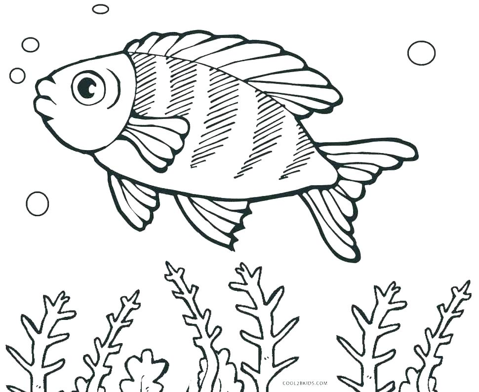 970x794 Fish Coloring Pages Adults Printable Fish Coloring Pages
