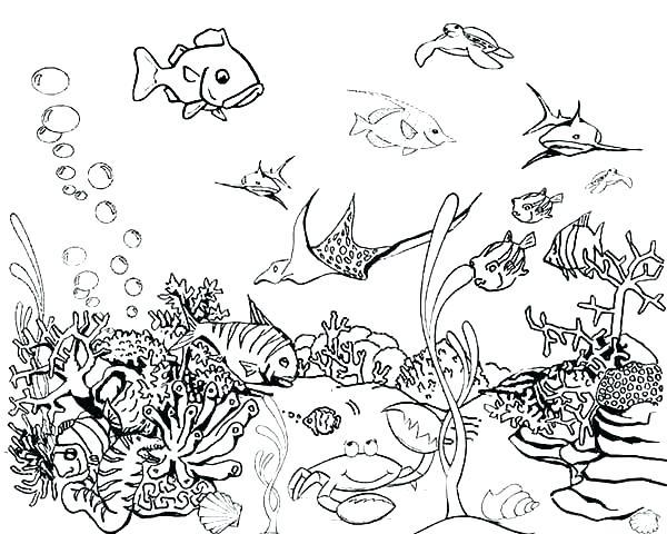 600x480 Fish Print Outs X X X Wallpaper Fish Print Out Fish Coloring Book