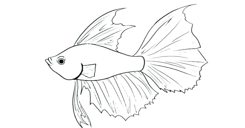 860x450 Coloring Pages Of Fish Fishing Pole Coloring Page Coloring Pages