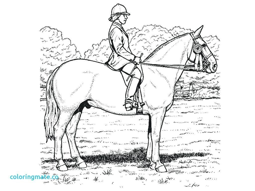 1024x768 Coloring Page Flat Stanley Coloring Page Realistic Horse Pages