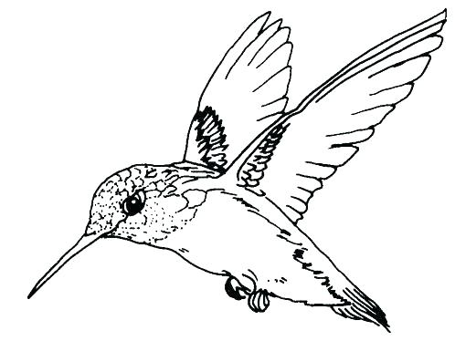498x374 Bird Flying Coloring Page Birds Flying South Coloring Pages