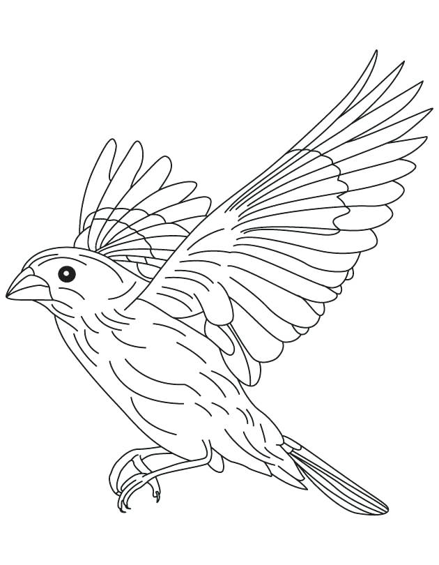 630x810 Brown Thrasher Coloring Page Brown Falcon In Flight Coloring Page