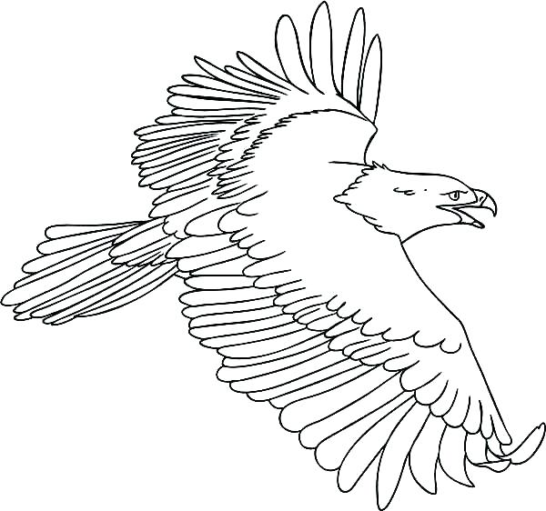 600x562 Eagle Color Page Eagle Mandala Coloring Pages Color Page Drawing