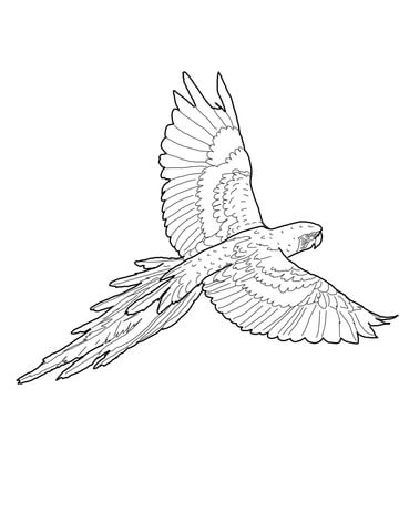 360x480 Flying Red And Green Macaw Coloring Page Coloring Pages