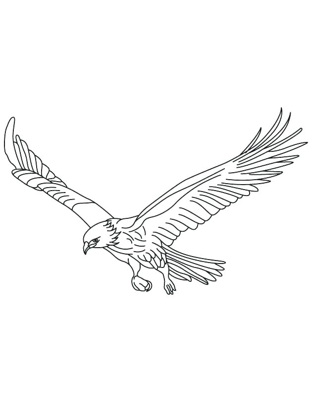 630x810 Outstanding Coloring Pages Birds Remarkable Coloring Pages