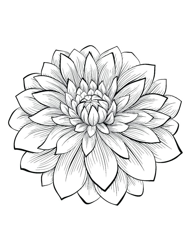 736x950 Floral Coloring Pages Free Printable Coloring Pages Designs