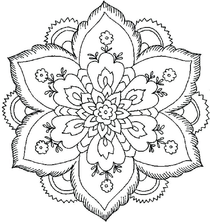 736x780 Flowers Coloring Pages For Drawing Blooming Aster Flower Coloring