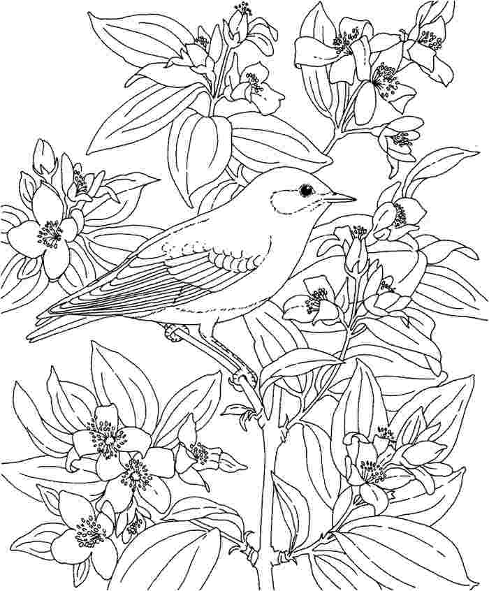 700x846 Hawaiian Flower Coloring Pages