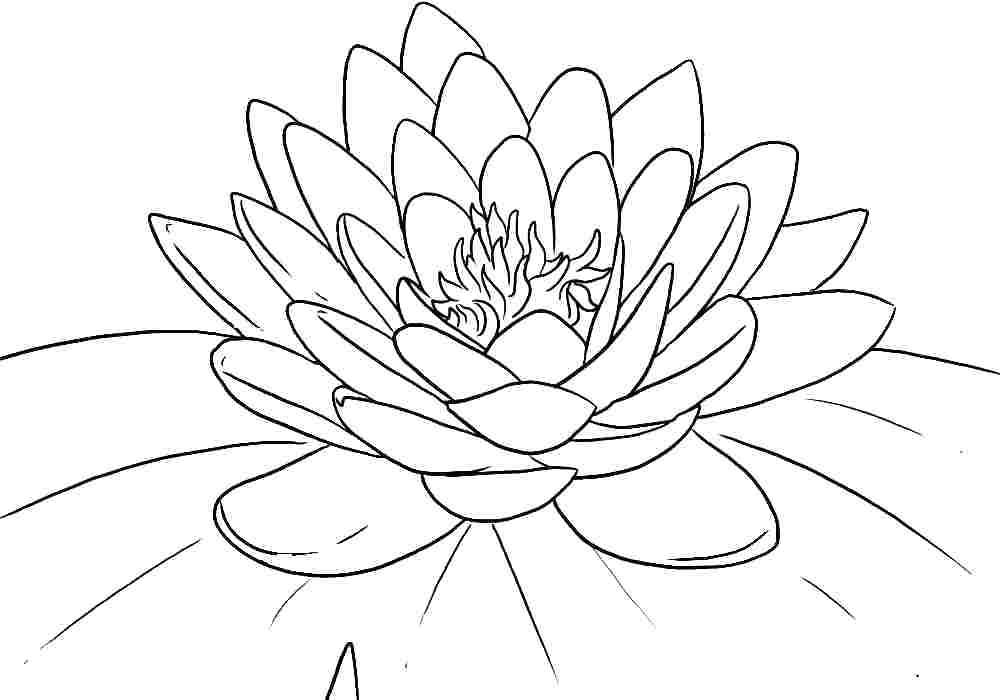 1000x700 Flower Pictures To Color Plus Lotus Flower Floral Design Coloring