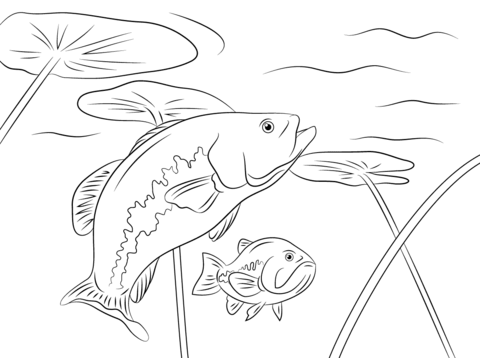 480x358 Largemouth Basses The Animal Fish From Florida Coloring Page