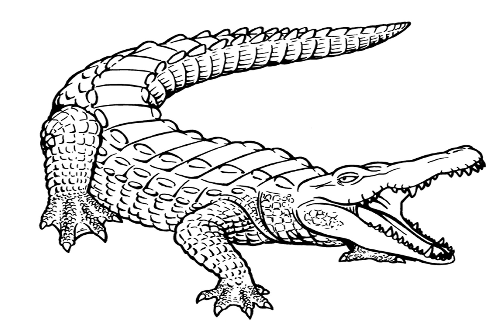 1632x1087 Gator Coloring Pages Coloring Pages Excellent Florida Gators