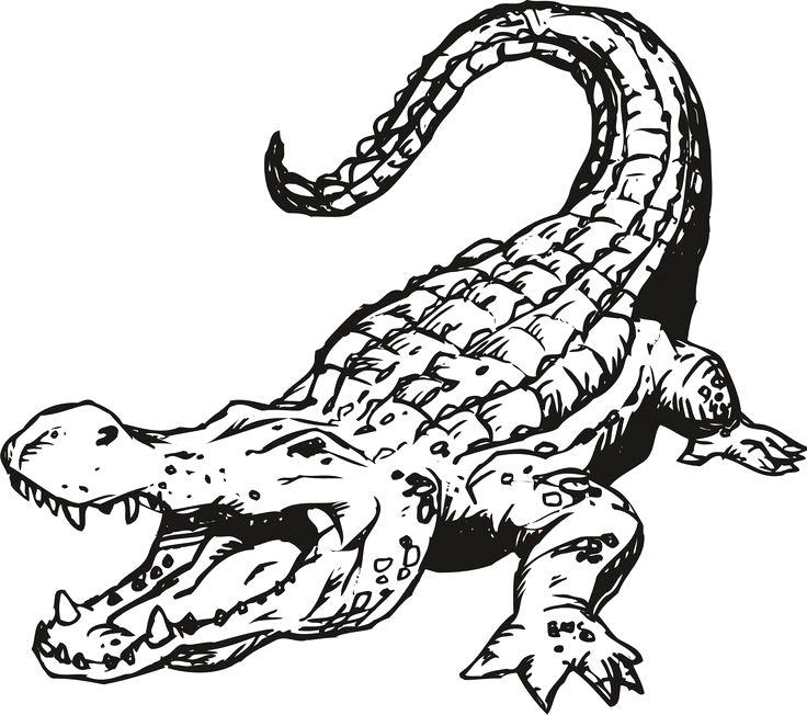 736x652 Florida Gator Coloring Pages Free Printable Alligator Coloring