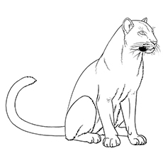 Florida Panther Coloring Page