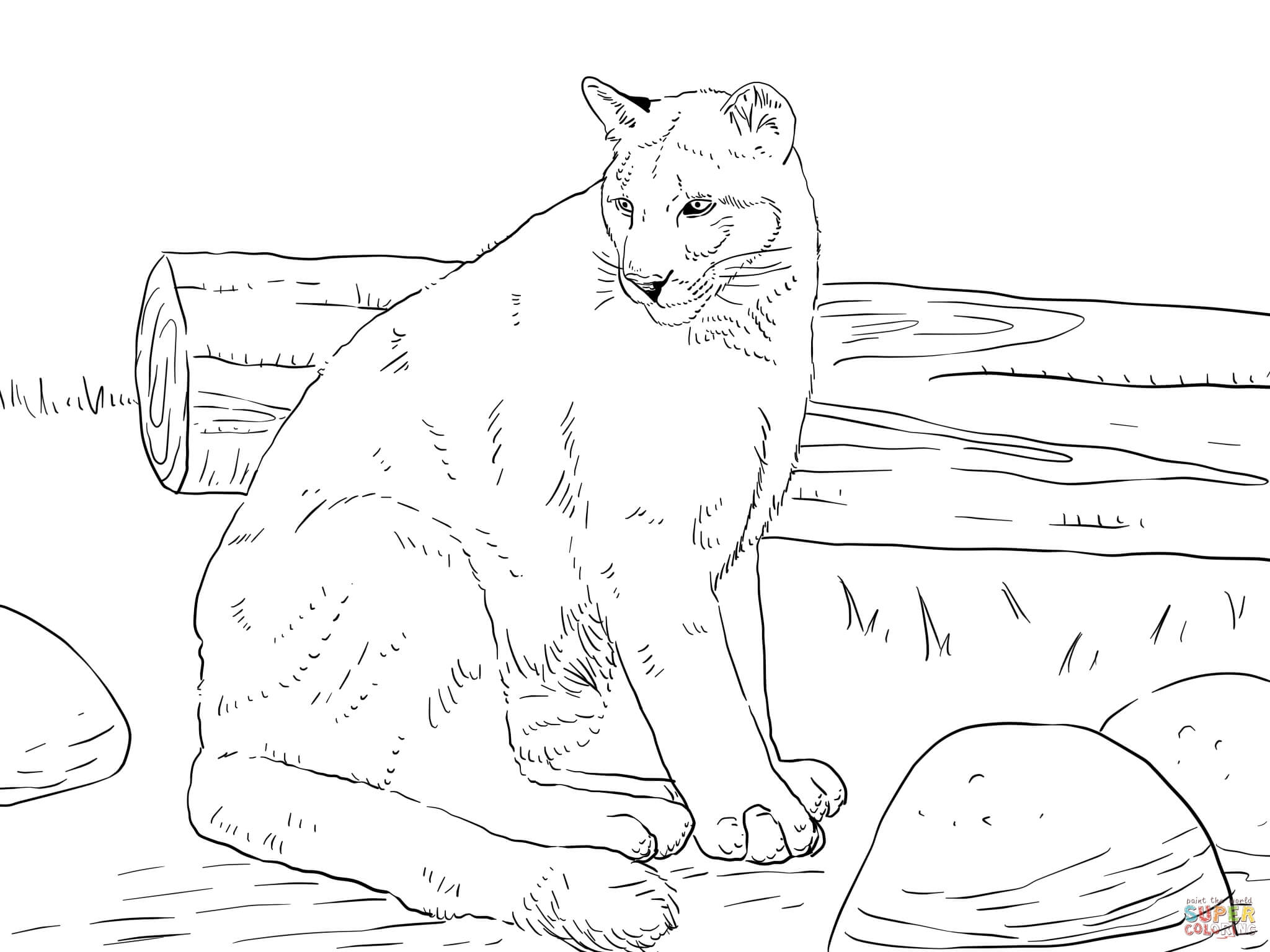 Florida Panther Coloring Page at GetDrawings | Free download