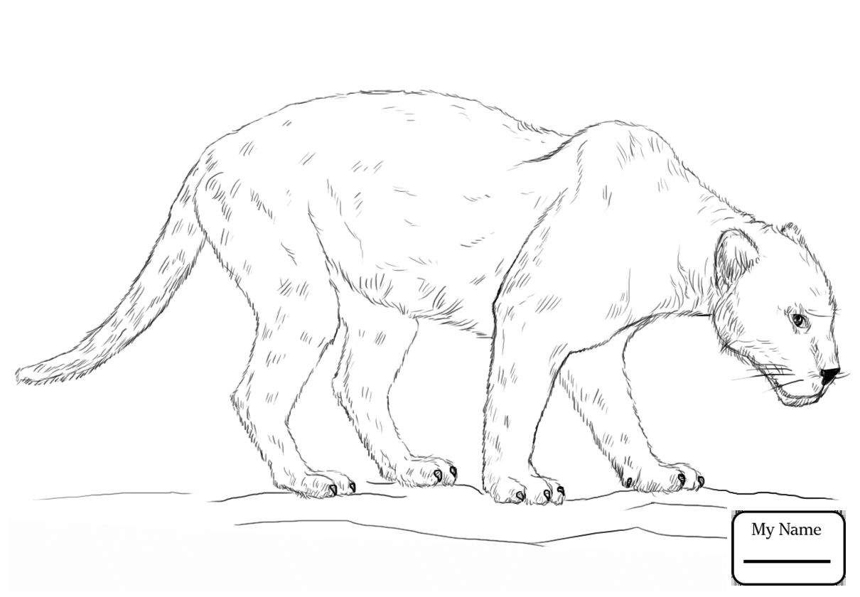 1210x840 Panther Coloring Pages With Panther Coloring Pages