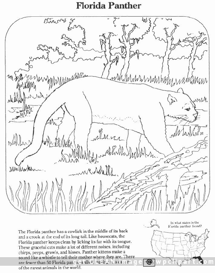 711x900 Florida Panther Coloring Pages Florida Panther