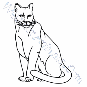 300x300 Florida Panther Coloring Pages