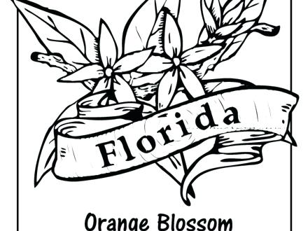 440x330 Florida State Symbols Coloring Pages Seal Etc Florida State