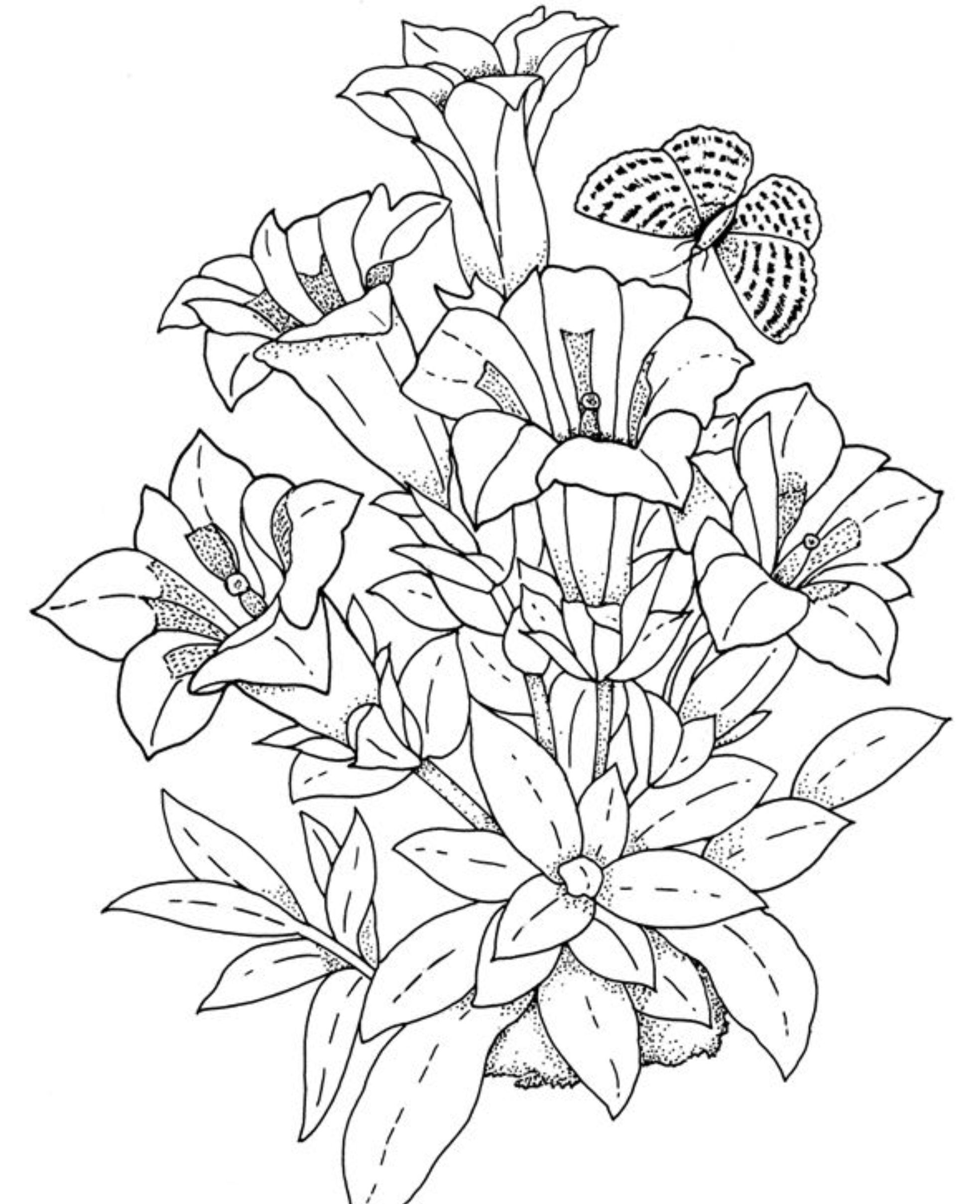 1968x2418 Realistic Flower Coloring Pages