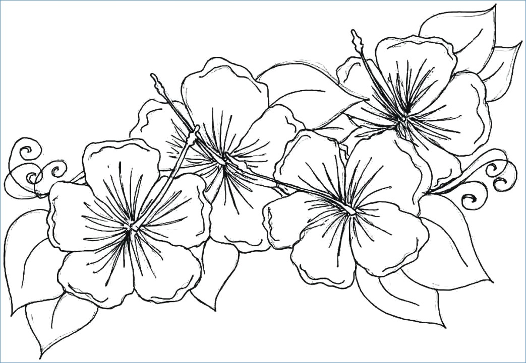 1043x721 Big Flower Coloring Pages