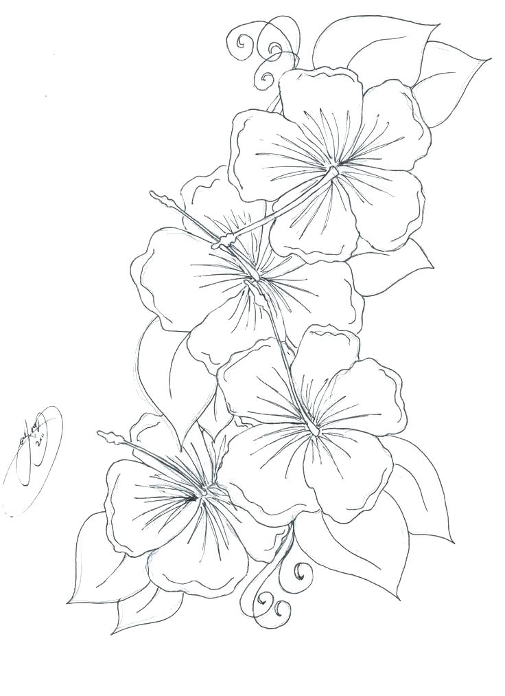 736x1013 Hibiscus Flower Coloring Pages Hibiscus Coloring Page Realistic