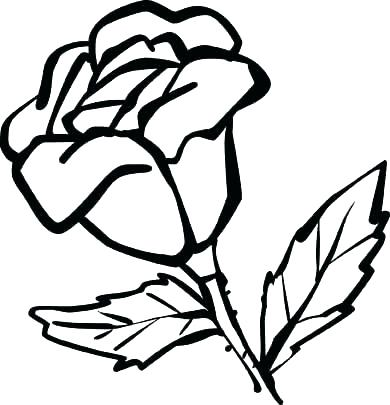 390x405 Rose Flower Coloring Pages Rose Color Page Rose Coloring Pages