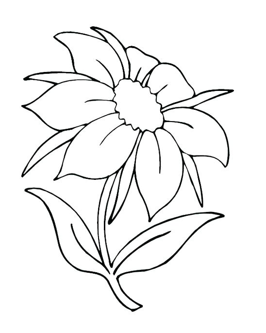 548x685 Color Page Flower Epic Flower Coloring Pages About Remodel