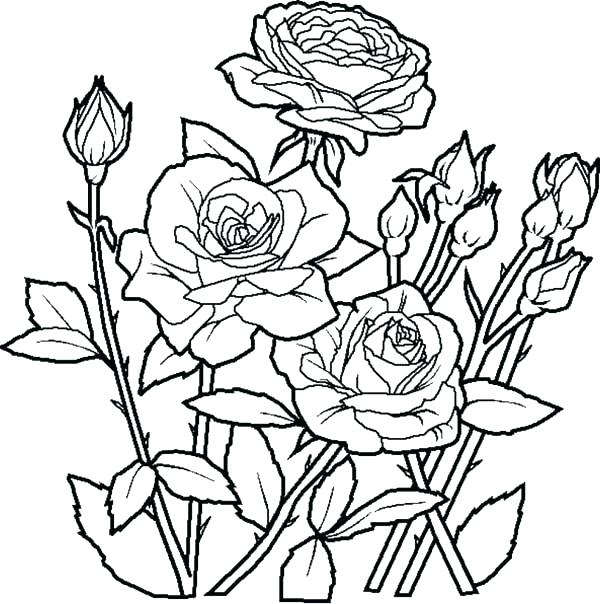 600x604 Flower Bouquet Coloring Pages