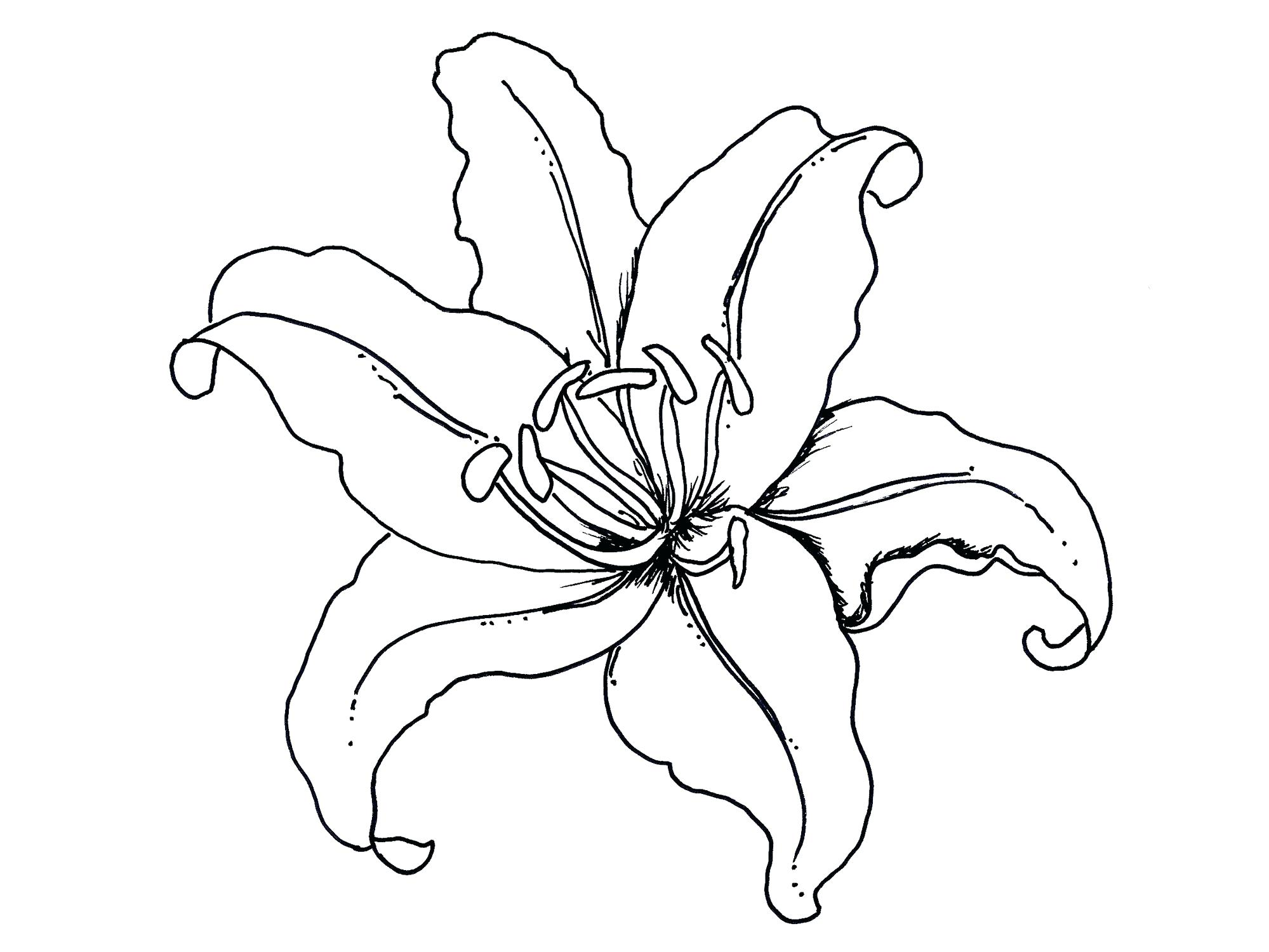 1999x1500 Coloring Pages Christmas Free Lily Pad Flower Cartoon Bees Make