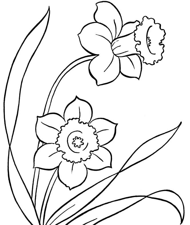 663x783 Spring Flowers Colouring Pages To Print