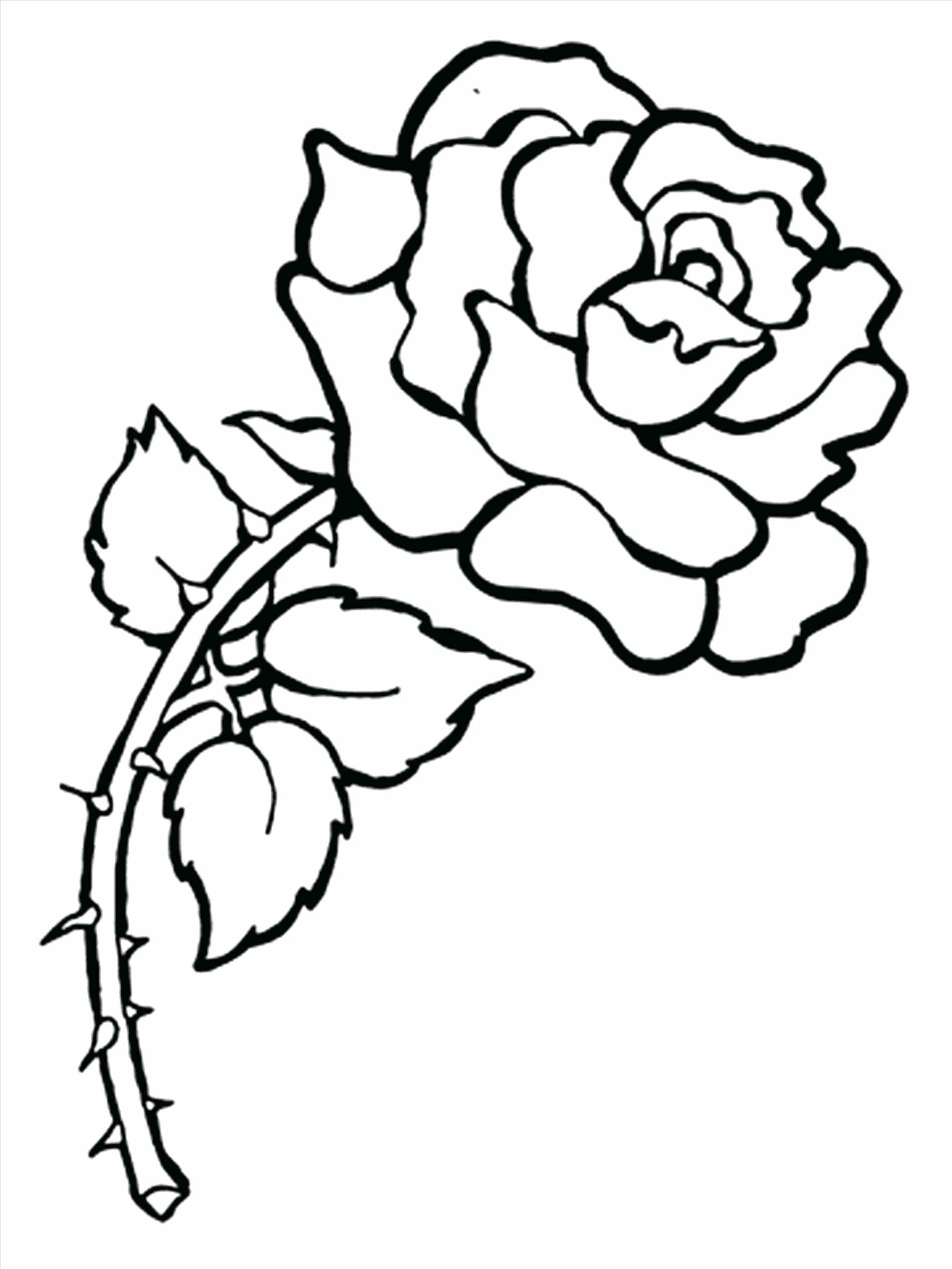 1900x2533 Fresh Realistic Flower Coloring Pages Gallery Printable Coloring