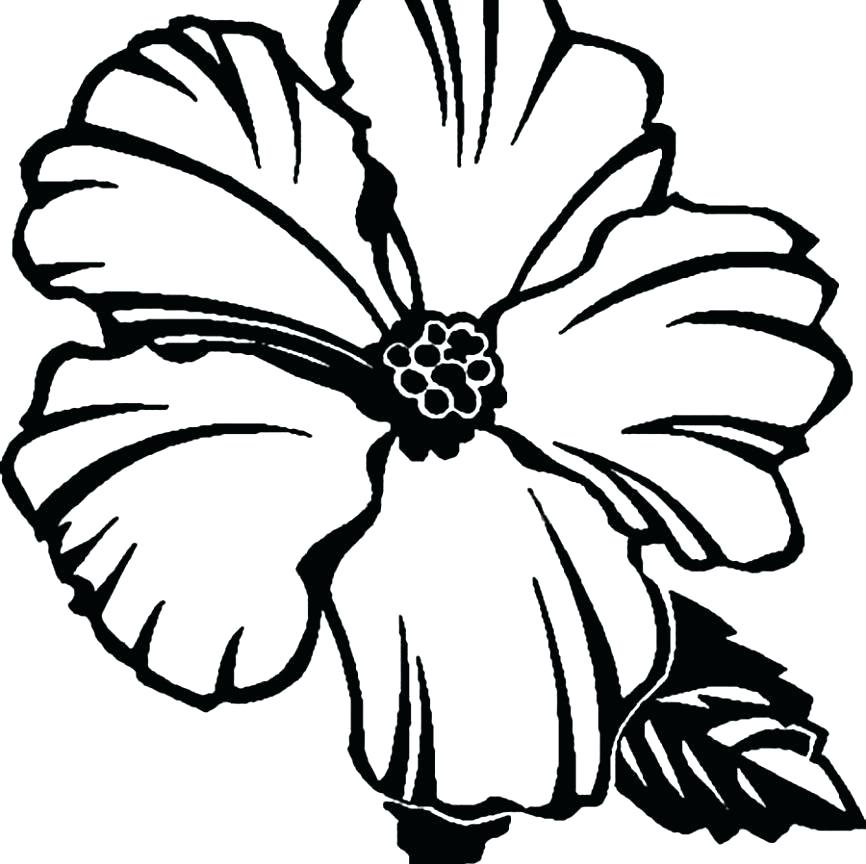 866x864 Hibiscus Flower Coloring Page Hibiscus Flower Coloring Pages Clip