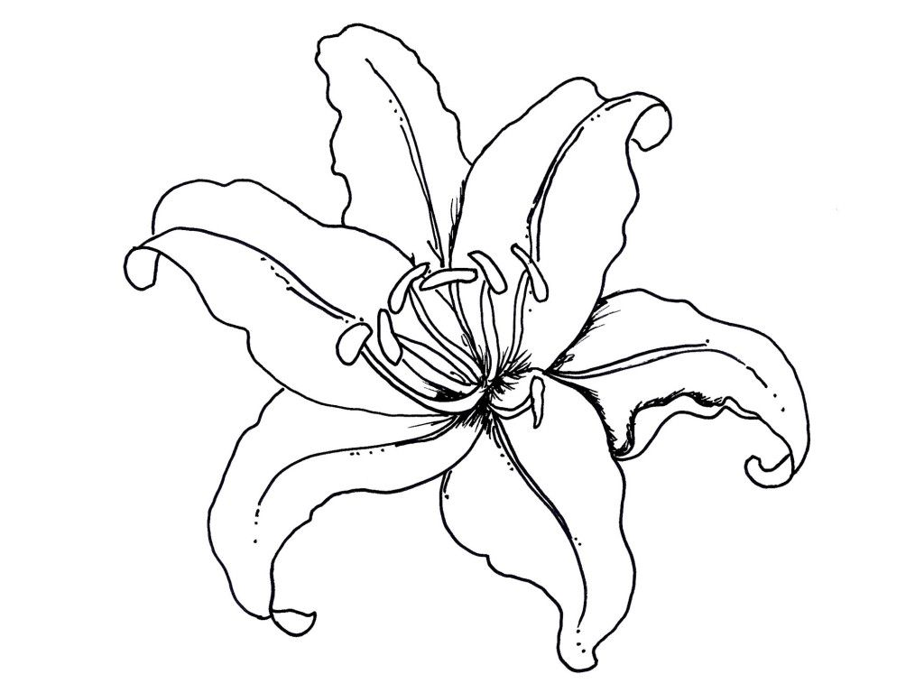1024x768 Incredible Flower Pot Coloring Page Clip Art Library For Carnation