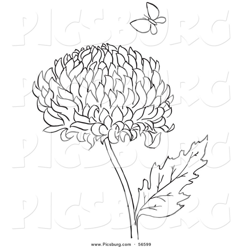 1004x1024 Printable Chrysanthemums Flower With Butterfly To Coloring Page
