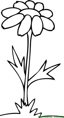 259x480 Simple Flower Coloring Pages