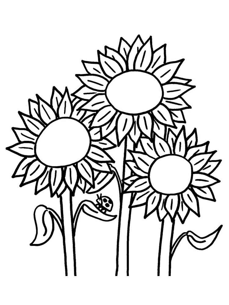 750x1000 Sunflower Coloring Pages Download And Print Sunflower Coloring Pages
