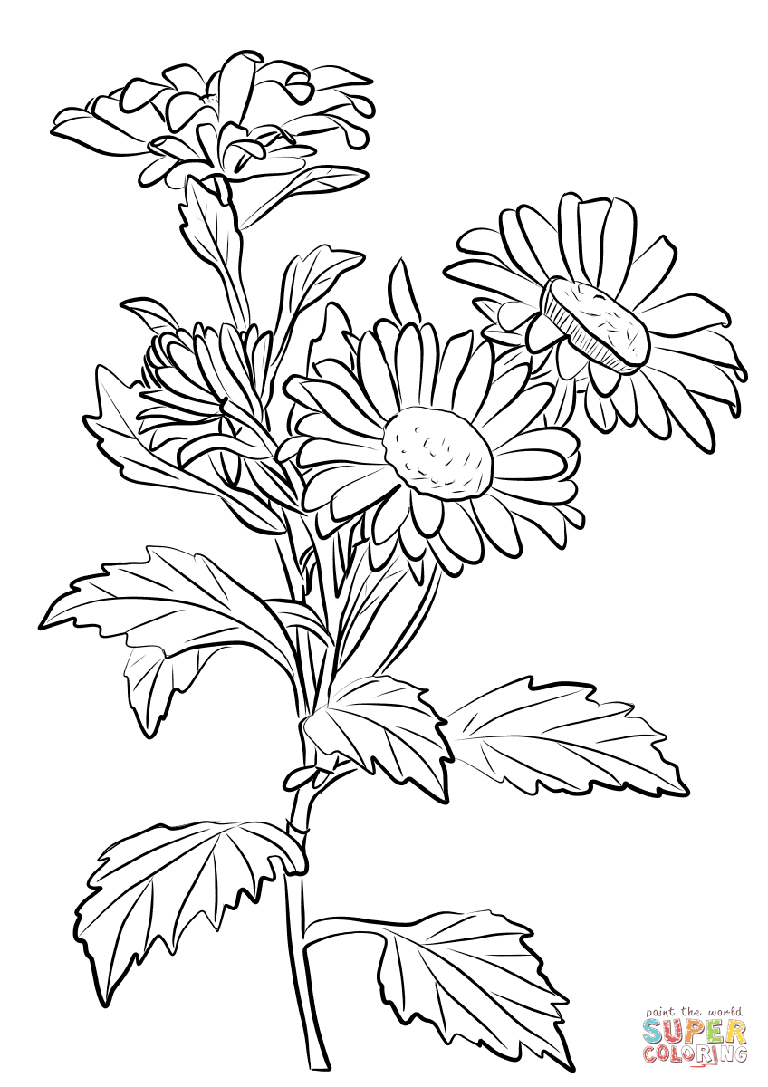 848x1200 Clip Art Of Coloring Page Chrysanthemum Flower Flowers Printable