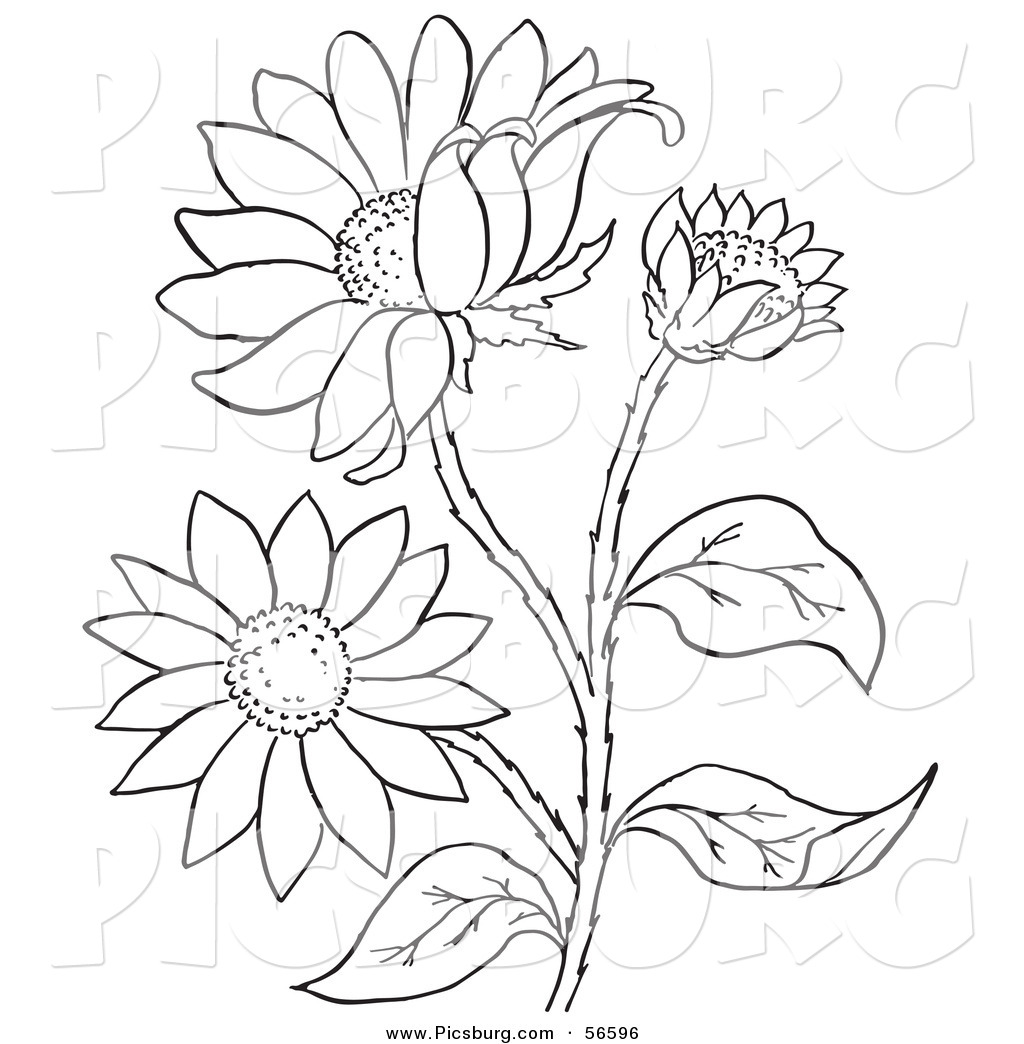 1024x1044 Clip Art Of A Coloring Page Of A Black Eyed Susan Flower Plant