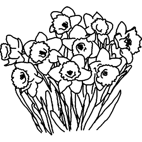 600x600 Daffodil Flower Bouquet Coloring Page