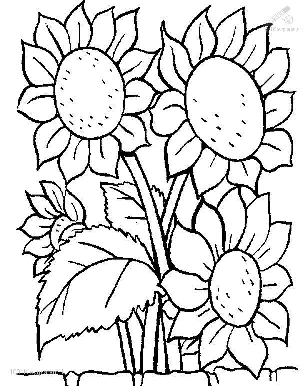 616x770 Flower Coloring Pages Coloringpages Plants Gtgt Flowers